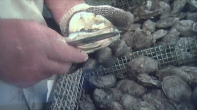 Oyster prices up for Thanksgiving with supply down