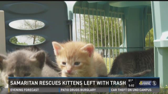 Good Samaritan rescues kittens left with trash