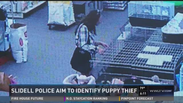 Sister of the puppy stolen