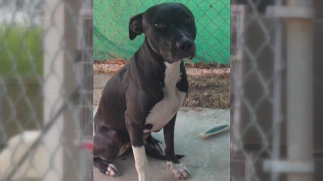 Infection shuts down Lafourche Animal Shelter